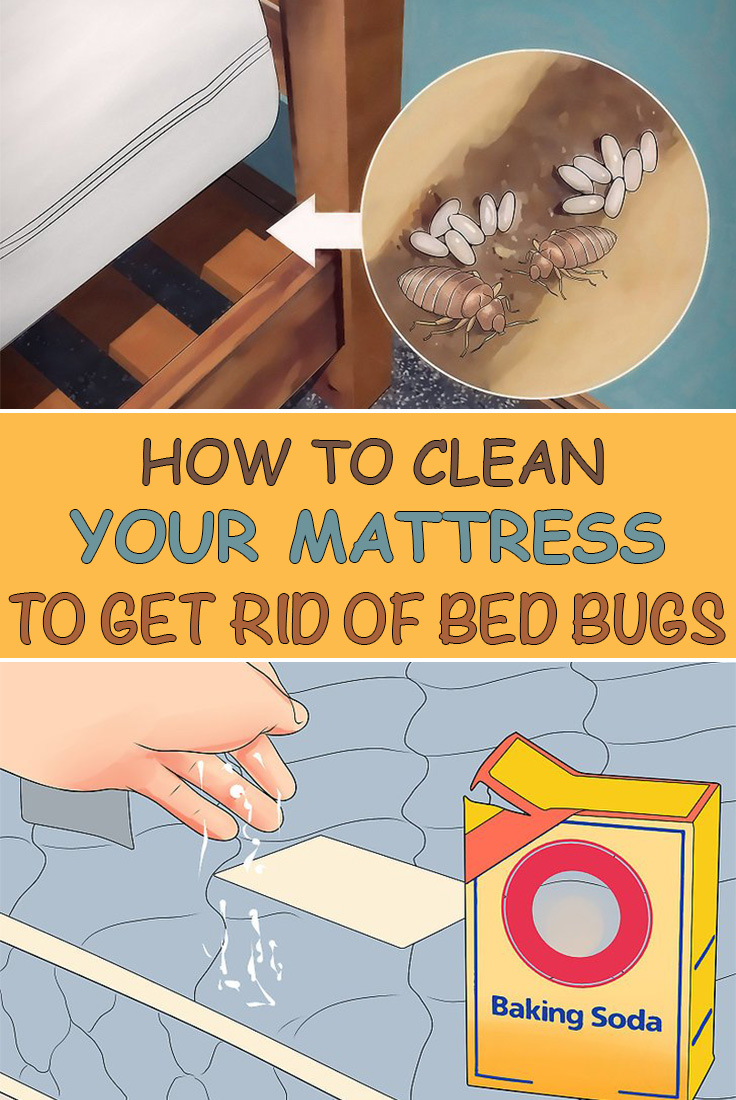 How To Clean Your Mattress Get Rid Of Bed Bugs Simple Tips